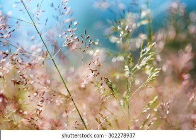 Detail of some flowering grass bending in the wind.