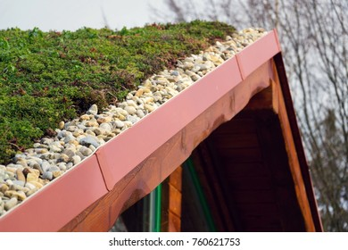 Detail of stones on extensive green living roof covered with vegetation mostly sedum sexangulare, also known as tasteless stonecrop