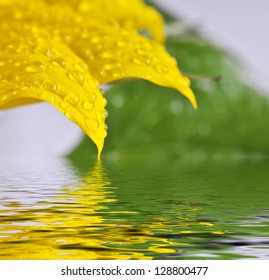 The detail - sunflower leaves and the drops.