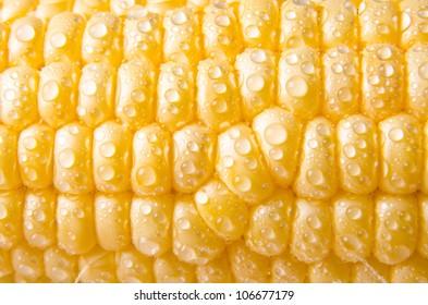 Detail of a sweet summer corn cob.