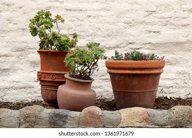 Detail of three terracotta pots with green plants