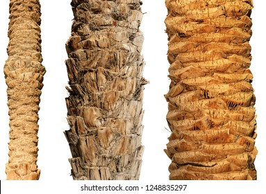 Detail of three trunks of palm trees isolated on white background