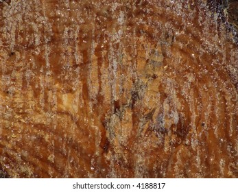 Detail of a tree trunk texture in a forest