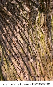 Detail of a tree trunk with very rough bark, with sunlight.