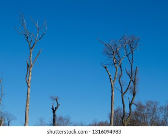 detail of trees against a blue sky