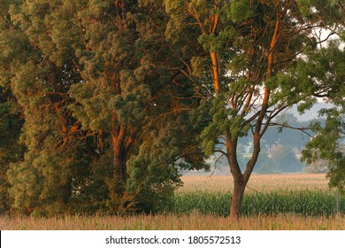 Detail of trees on the farmland at sunrise near Melden, Belgium