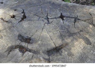 The detail of a treestump