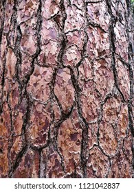 """Detail of the trunk of """"The Grizzly Giant"""", the oldest tree at Mariposa Grove of Giant Sequoias, a sequoia grove located near Wavona, California, in the southernmost part of Yosemite National Park."""