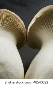 Detail of two king oyster mushrooms