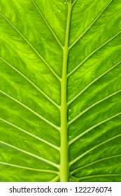 Detail of the veins of a leaf