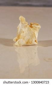 Detail view of a human spine vertebral bone
