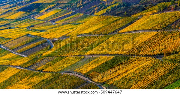 Detail view on autumn colorful Moselle vineyards