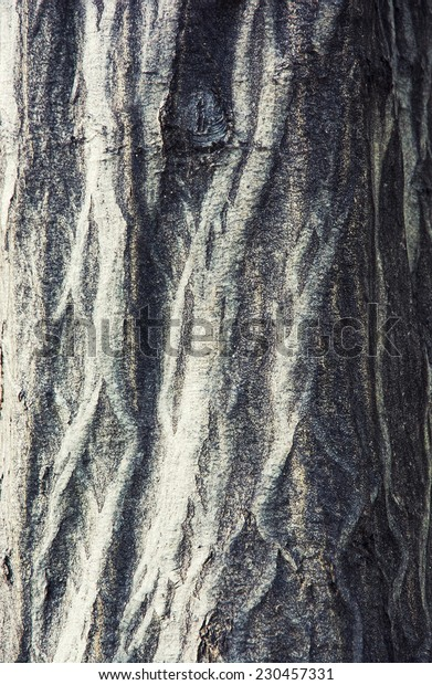 Detail view of tree bark. Natural background.