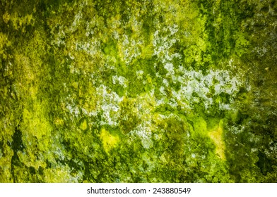 detail of a wall covered with mildew