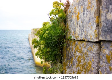 Detail at Wall of the Fortifications of Vauban, France