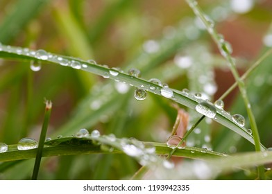 Detail of water drops on the grass
