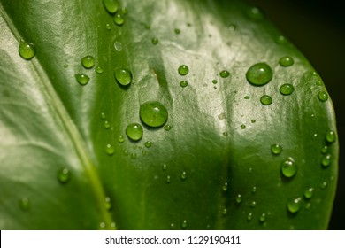Detail of Water drops on green leaves.
