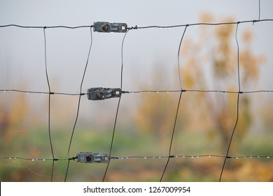 Detail of wet fence on a foggy day in the pasture