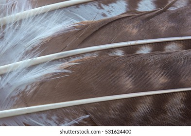 Detail of white and brown wing feathers of a hawk as a background. The texture of bird feathers. Selective focus.