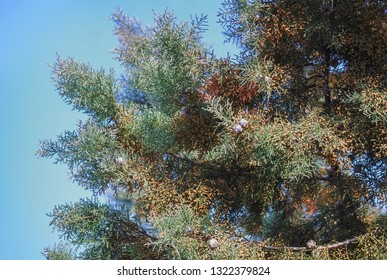 Detail of a wild coniferous tree in a beautiful sunny day