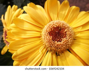 Detail of a yellow flower