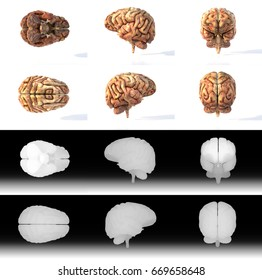Detailed 3D Renders of the Human Brain. Aged, gory version. Matching depth channel included for easier editing.
