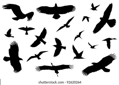Detailed bird silhouettes of different kind. Isolated on white.