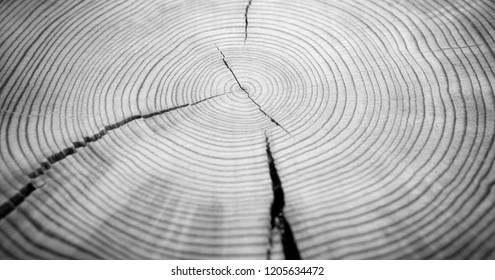 Detailed black and white wood rings texture. Smooth detailed cracked wood textured tree ring background. Piece of round wood with cracks.