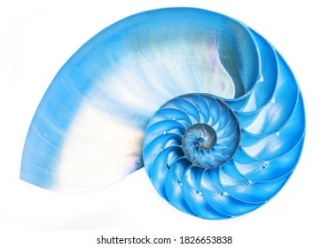 Detailed blue halved shell of a chambered nautilus (Nautilus pompilius) shows beautiful spiral pattern. Isolated on white