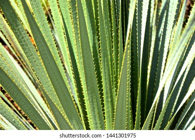 Detailed close up of green spikey succulent plant