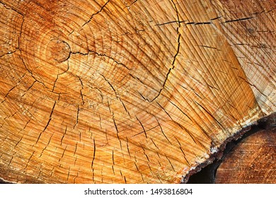Detailed close up texture of stacked firewood with annual rings in high resolution