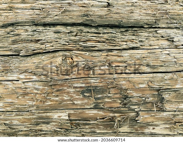 detailed close up view of fallen log wood tree trunk with natural weathered