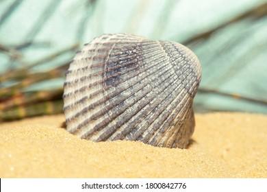 Detailed closeup macro photo of a seashell