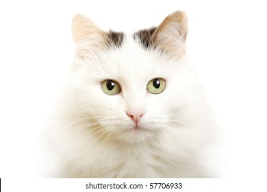 Detailed closeup shot of a stunningly beautiful cat in studio