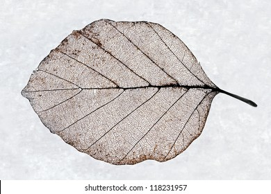 detailed close-up of a skeleton leaf