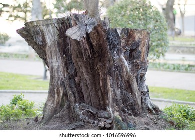Detailed cutted tree bark and roots in close up in a park