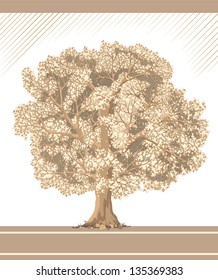 Detailed graphic tree like sepia and pencil drawing