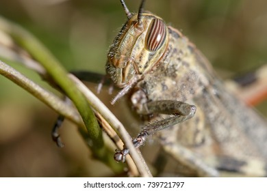 Detailed grasshopper head macro. Beautiful light from a portuguese meadow in a sunny early autumn day