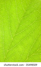 Detailed Green Leaf Macro Background Texture