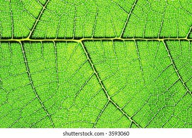 Detailed macro of a green leaf