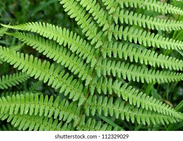 Detailed macro image of fern fronds, showing leaf structure