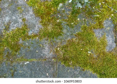 Detailed mossy wall high resolution texture