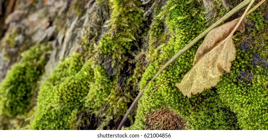 Detailed photo of moss growing on tree bark with a large brown leaf in the foreground