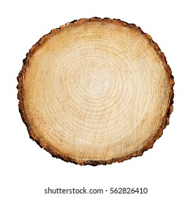 Detailed piece of circular flat cut wood showing annual rings, cracks, bark and texture