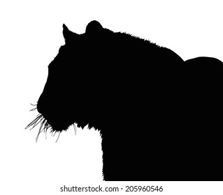 Detailed Portrait Silhouette of Large Tiger Face