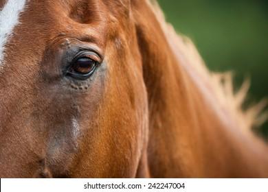 detailed portrait of very nice horse head looking
