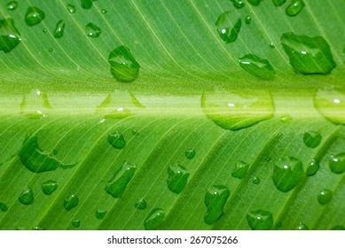 Detailed rain droplets over green leaf.