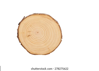 detailed sectional view of the tree (white background)