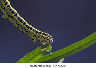 Detailed shot of a caterpillar on a leaf
