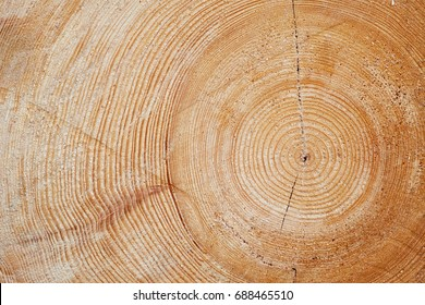 Detailed texture of annual ring on wooden beam